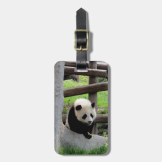 Panda Photograph - Personalizable Luggage Tag