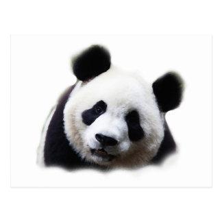 Panda Post Cards