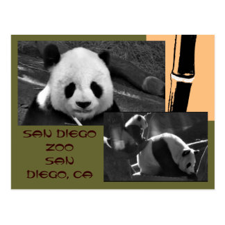 Panda San Diego Zoo Postcard