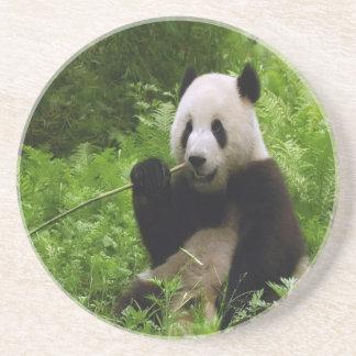Panda Sandstone Coaster