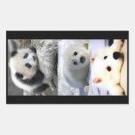 Panda-Seal-Mini American Eskimo Rectangular Stickers