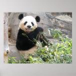 Panda Snack Posters