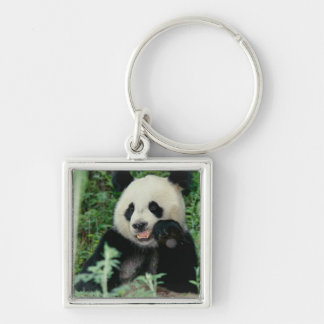 Panda the forest, Wolong, Sichuan, China Silver-Colored Square Key Ring