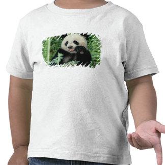 Panda the forest, Wolong, Sichuan, China Tshirts