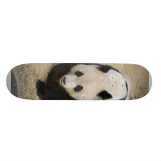 PandaM003 Skateboard