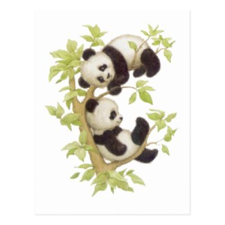 Pandas Playing in a Tree Postcard