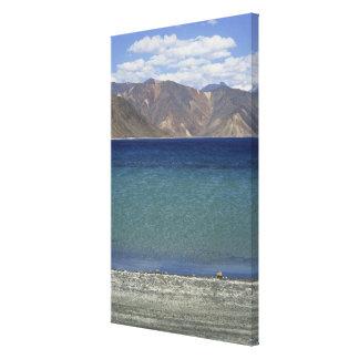 Pangong Lake, Ladakh, India Canvas Print