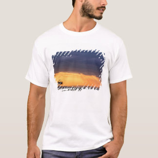 Panoramic view of Vulture and acacia tree T-Shirt