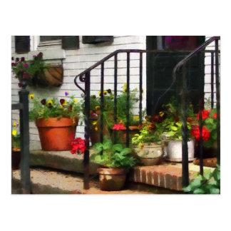 Pansies and Geraniums on Stoop Postcard