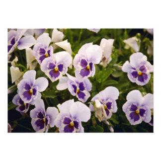 Pansies flowers invitations