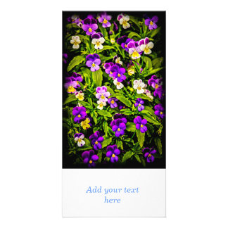 Pansies Photo Card Template