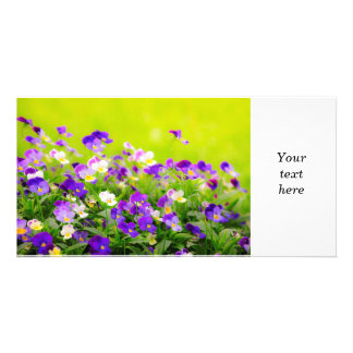 Pansies Picture Card