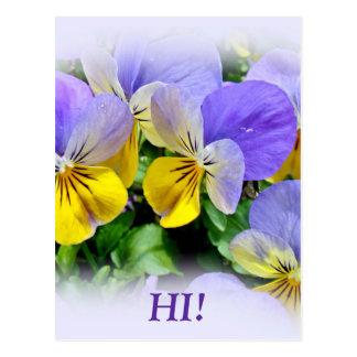 Pansies - Purple asnd Yellow Postcard