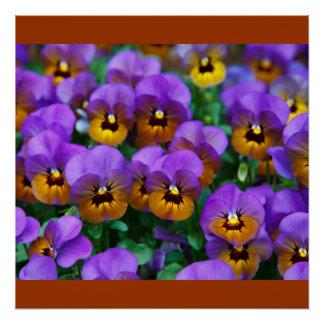 Pansies Red Vines Spring Love Peace Destiny