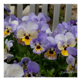 """Pansy Blues Fence"" Art Poster"