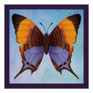 Pansy Daggerwing Butterfly Poster