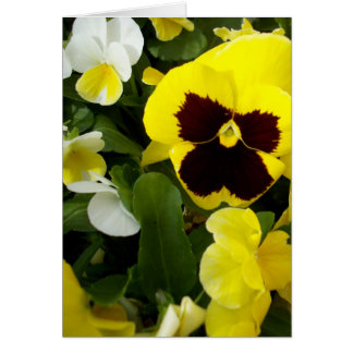 Pansy_Delights,_Small_Note_Greeting_Card Card