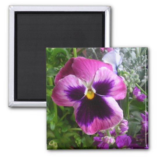 pansy face square magnet