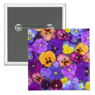 Pansy flowers floating in bird bath with dew 15 cm square badge