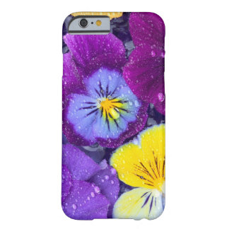 Pansy flowers floating in bird bath with dew 2 barely there iPhone 6 case
