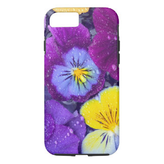 Pansy flowers floating in bird bath with dew 2 iPhone 8/7 case