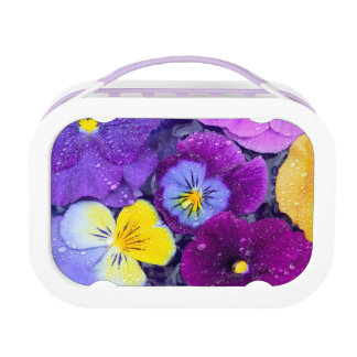 Pansy flowers floating in bird bath with dew 2 lunchbox