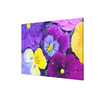 Pansy flowers floating in bird bath with dew canvas prints