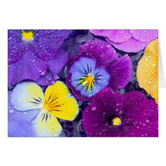 Pansy flowers floating in bird bath with dew greeting card