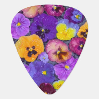 Pansy flowers floating in bird bath with dew guitar pick