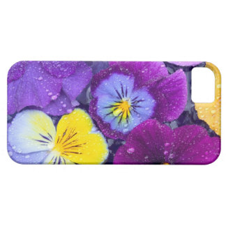 Pansy flowers floating in bird bath with dew iPhone 5 cover