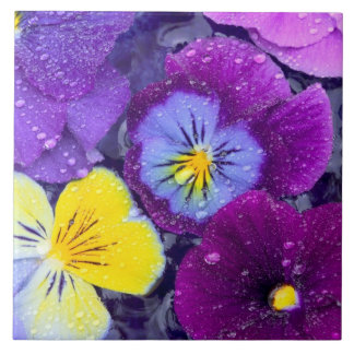 Pansy flowers floating in bird bath with dew large square tile