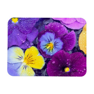 Pansy flowers floating in bird bath with dew magnet