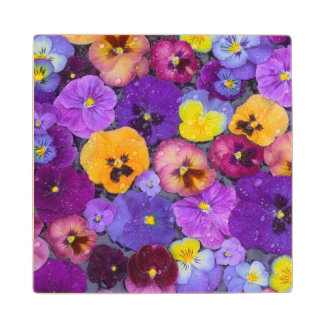 Pansy flowers floating in bird bath with dew wood coaster