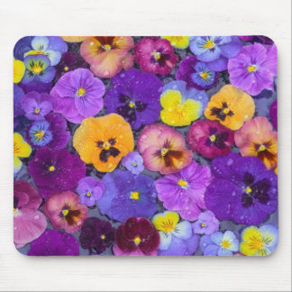 Pansy flowers floating in bird bath with dew mouse mat