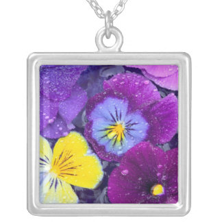 Pansy flowers floating in bird bath with dew pendants