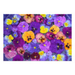 Pansy flowers floating in bird bath with dew photo