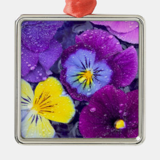 Pansy flowers floating in bird bath with dew Silver-Colored square decoration