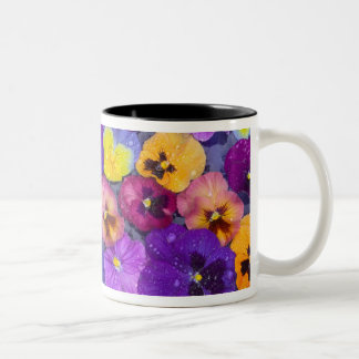 Pansy flowers floating in bird bath with dew Two-Tone mug
