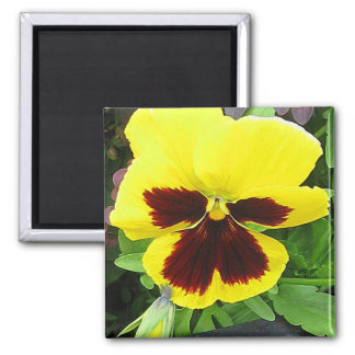 Pansy Gift Magnet
