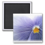 Pansy Magnet Magnet