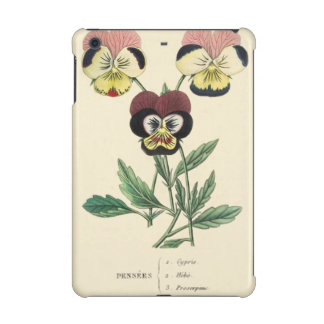 Pansy Pansies Flower Illustration