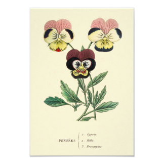 Pansy Pansies Flower Illustration 9 Cm X 13 Cm Invitation Card