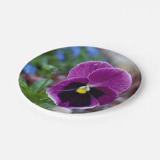 Pansy Paper Plate