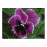 Pansy Pictures Invitation