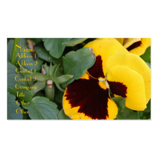 Pansy Profile Card Pack Of Standard Business Cards