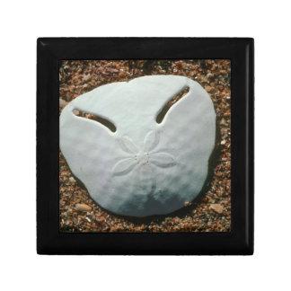 Pansy Shell Urchin (Echinodiscus Bisperforatus) Small Square Gift Box