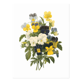 pansy(Viola sp.) by Redouté Postcard