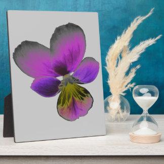 Pansy Wild Dark Purple Plaque