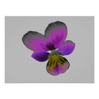 Pansy Wild Dark Purple Print
