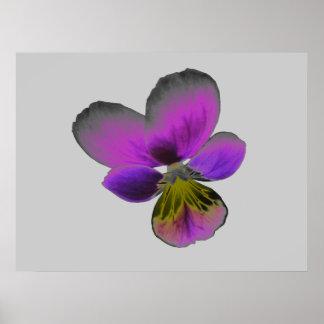 Pansy Wild Dark Purple Print